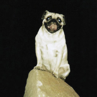 A Training Boulder in Phoenix by Vinny the Pug