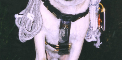 A picture from Vinny the Pug Training Rock in Phoenix by Vinny the Pug