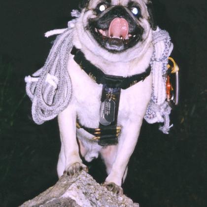 Vinny the Pug Training Rock in Phoenix by Vinny the Pug