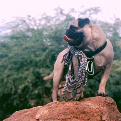 PAPAGO PARK by Vinny the Pug